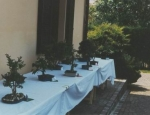 tavolo_bonsai
